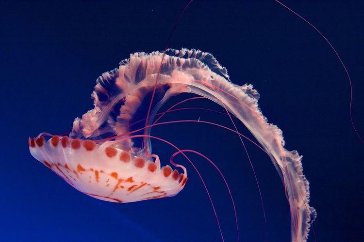 Animal Aquarium