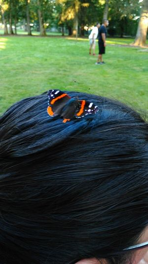 Check This Out Butterfly Butterfly On My Head Butterfly On A Head
