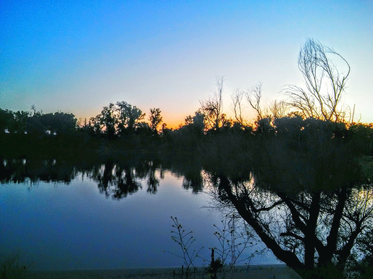 EyeEm Best Edits Beauty In Nature Eyem Nature Lovers  Nature On Your Doorstep Sunset Taking Photos Nature My Point Of View My Photography Trees Tree Porn Tree Silhouettes Tree And Sky Reflections On The Water Reflections On The River Sacramento River