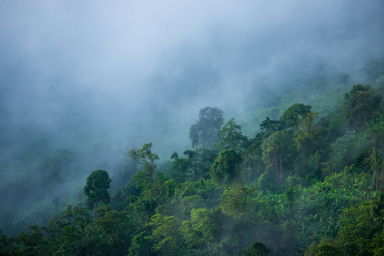 Tree Plant Fog Environment No People Scenics - Nature Forest Land Beauty In Nature Nature Mountain Non-urban Scene Cloud - Sky Lush Foliage Foliage Green Color Landscape Sky Outdoors Rainforest Tropical Rainforest Pollution Air Pollution
