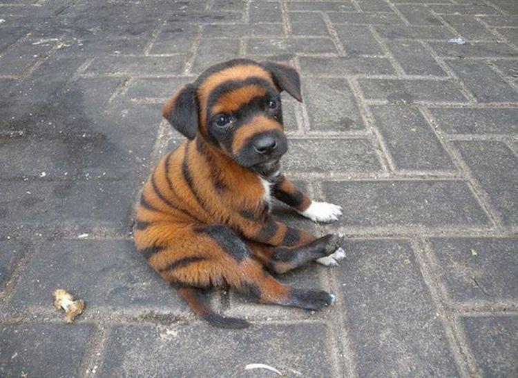 Dog Puppy Cutedog Love
