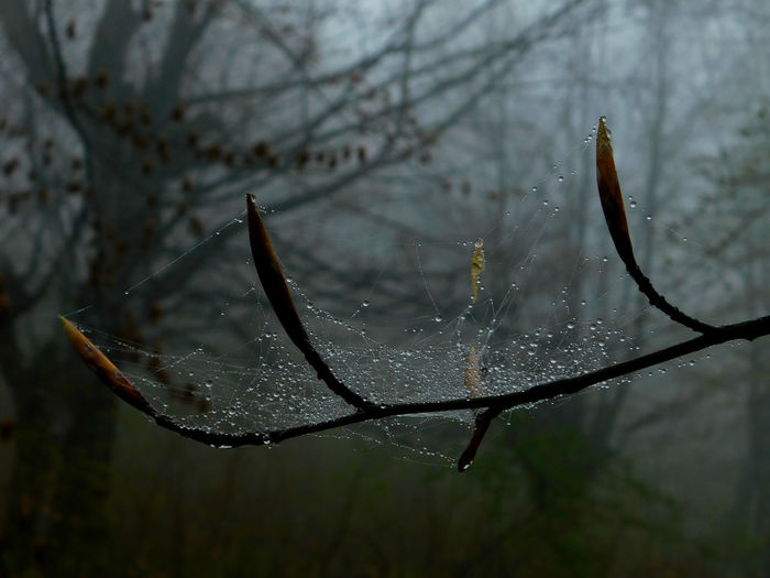 Beauty In Nature Branch Close-up Cold Temperature Day Dew Drop Focus On Foreground Fragility Ice Nature No People Outdoors Plant Rain RainDrop Rainy Season Spider Web Stick - Plant Part Tranquility Tree Twig Water Wet Winter