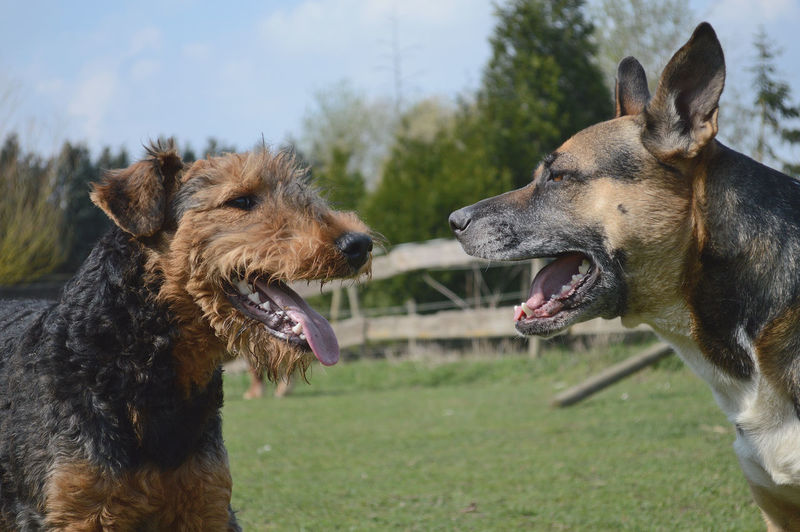 Animal Head  Animal Themes Close-up Dogs Dogslife Domestic Animals Focus On Foreground Pets Side View Two Animals