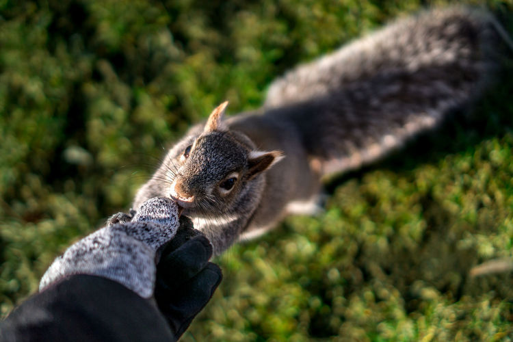 Animal Animal Themes Animal Wildlife Animals In The Wild Beauty In Nature Bird Boston Close Up Close-up Day Extend Friendship Holding Human Body Part Human Hand Mammal Nature One Animal One Person Outdoors Park Real People Squirrel Wildlife Winter