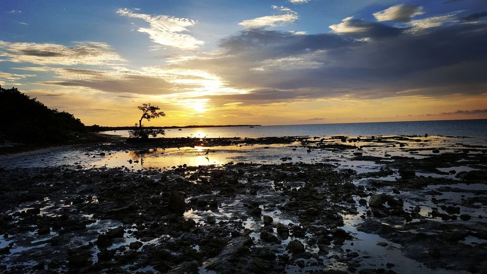 Good morning from the Florida Keys... Sunrise Camping Ocean Long Key Long Key State Park Tree Sunrise On The Beach Sky And Clouds Enjoying Life Nature Landscape