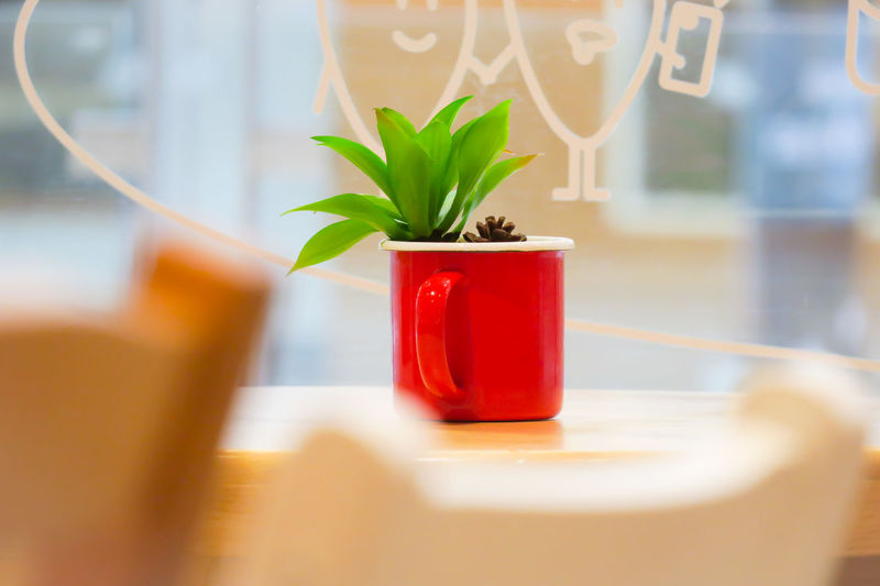 Cactus Cactus Flower Interior Style Interior Views Interior Decorating Relaxing Wooden Table Background Blur Close-up Day Drink Food And Drink Freshness Glass Indoors  No People Potted Plant Red Refreshment Sacculent Succulent Plant Table Window Wooden