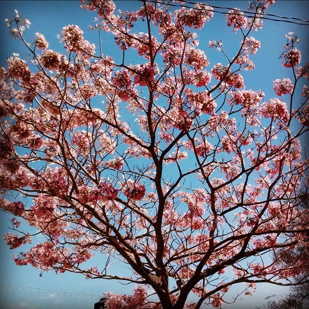 tree, flower, beauty in nature, branch, low angle view, growth, nature, springtime, sky, fragility, no people, blossom, day, outdoors, freshness, close-up