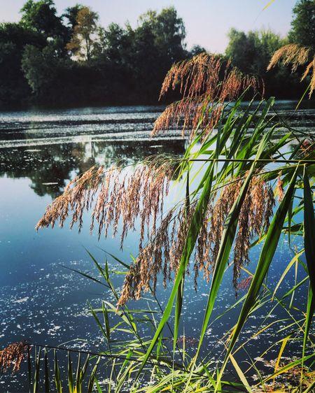stillness Water