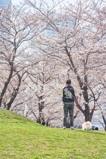 Walk Yokohama Japan Eye4photography  EyeEm Best Shots Nature_collection Sakura One Person Full Length One Man Only Men Adult Day Outdoors Grass Only Men Adults Only Real People Tree People Flower Growth Nature Beauty In Nature Sky