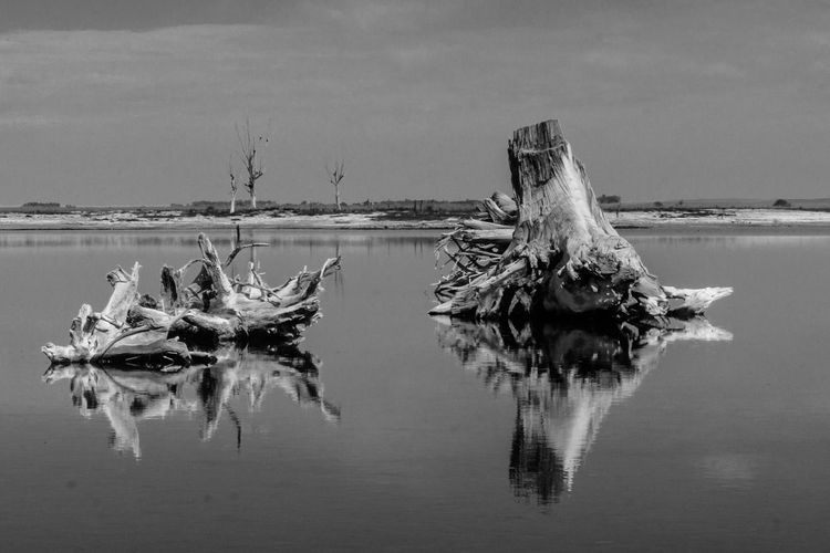 Scenic view of driftwood in lake