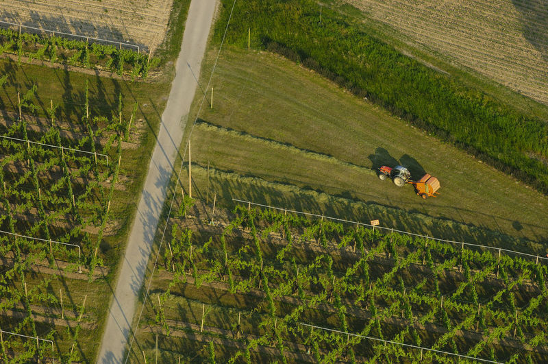 vineyards in Veneto, Italy A Bird's Eye View Aerial View Agricultural Machinery Agriculture Beauty In Nature Color Palette Cultivated Land Farm Farmland Field Grass Green Color Harvesting High Angle View Landscape Nature Prosecco Rural Landscape Rural Scene Rural Scenes Veneto Italy Vineyard Flying High
