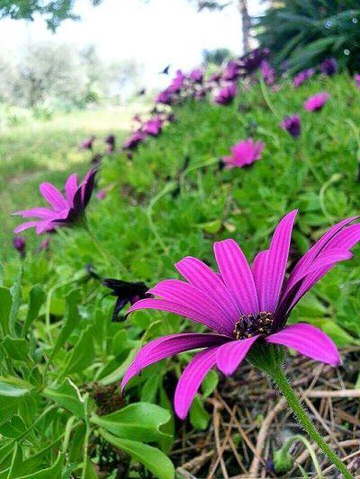 Flowers Landscape #Nature #photography Nature Violet Flowers EyeEm Best Shots - Landscape