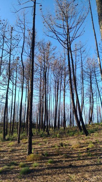 Tree Forest Tree Trunk Sky Grass Landscape