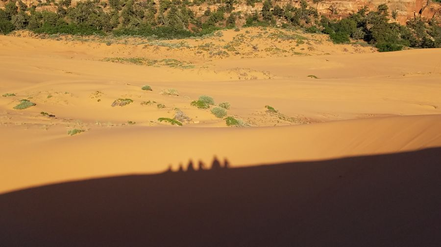 A day at the dunes Sand Dune Sand Landscape Desert Scenics Tranquility Sunset Land Nature Hill Outdoors Arid Climate Shadows & Lights Shadow Photography Shadow Selfie My Shadow