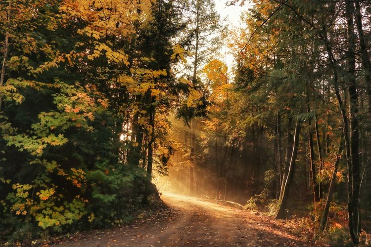 The start of a brand new day Autumn Light And Shadow Path In Nature Outdoor Photography Nature Beauty In Nature Tree Forest Branch Sky Streaming Sunbeam Countryside Empty Road Country Road Shining Tree Area Leaves A New Beginning Autumn Mood 50 Ways Of Seeing: Gratitude Capture Tomorrow 2018 In One Photograph 17.62°