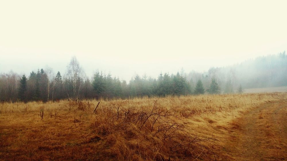 No Snow In Winter Beskidżywiecki Mountain View Meadow Meadowsinthemountains Forest Walking EyeEm Nature Lover