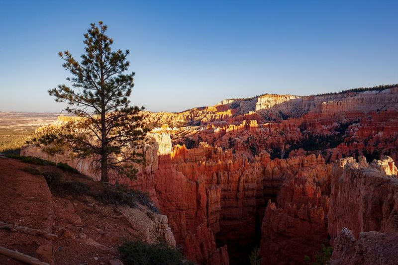 Sunset in the Canyon A Tree Life Pine Tree Sky EyeEm United States Of America Bryce Canyon National Park Bryce Canyon National Park 夕阳里的布莱斯峡谷国家公园 Plant Tree Sky Nature Growth Beauty In Nature Tranquil Scene