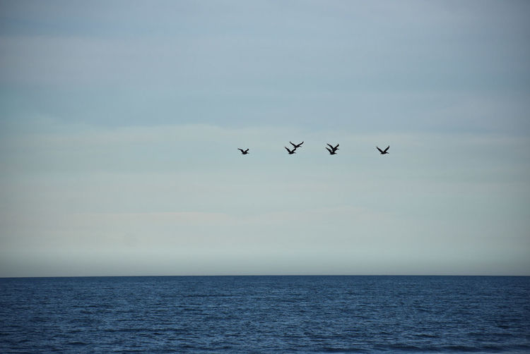 Birds flying over sea against sky