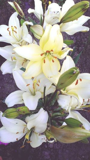 Summer Flowers Nice Summertime