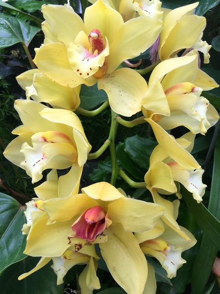 Yellow orchids Flower Freshness Beauty In Nature Flower Head Nature Yellow Plant Yellow Orchids Orchids