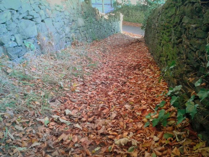 Autumnleaves Autumnbeauty Autumn Leaves Autumnbeauty Pathways Outdoors Sunlight Tranquil Scene Beauty In Nature No People Nature Drystonewalls Leaf Autumn
