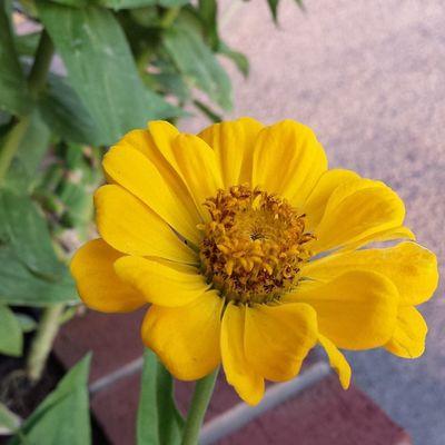 A beautiful flower... Shepic2014