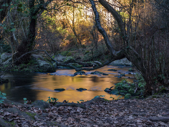 Scenic View Of River Stream Amidst Trees In Forest