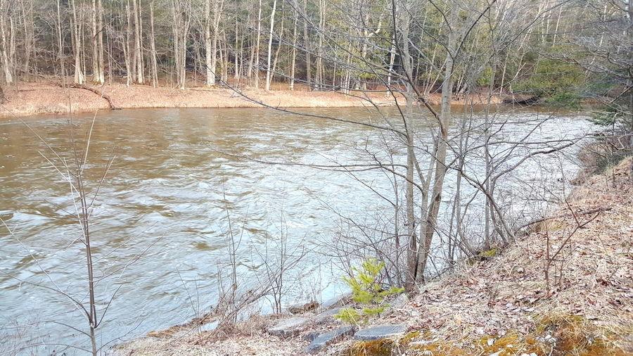 Rivers Riverside Rifleriver Pure Michigan Michigan River