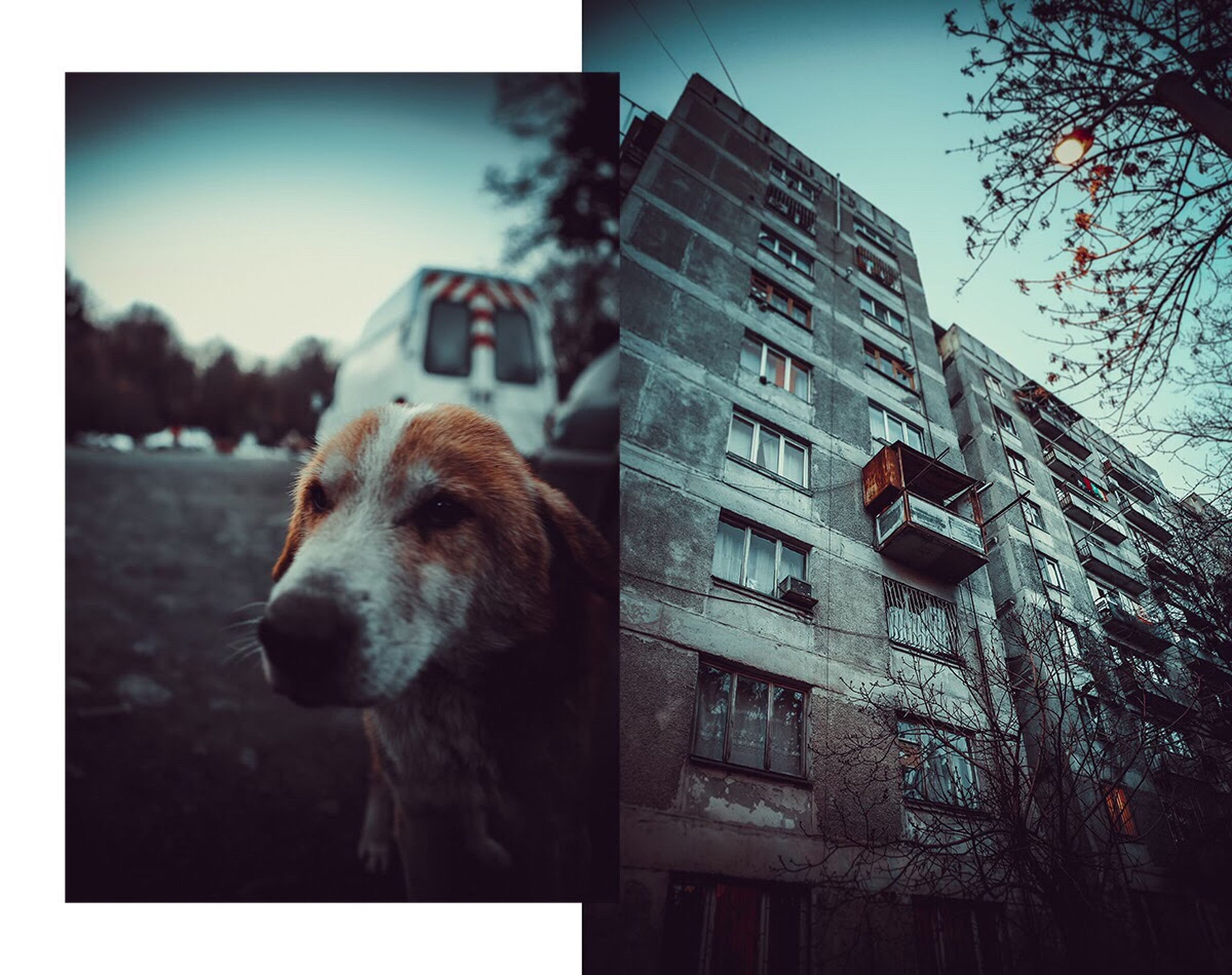 animal themes, one animal, building exterior, domestic animals, mammal, built structure, pets, architecture, no people, animal head, day, dog, outdoors, sky, close-up