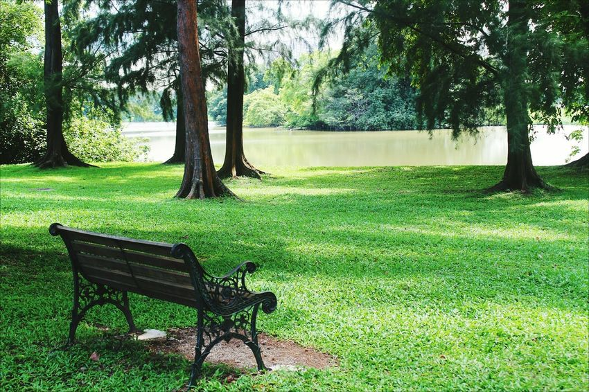 No People Tranquility Grass Green Color Backgrounds Singapore Outdoors Breathing Space