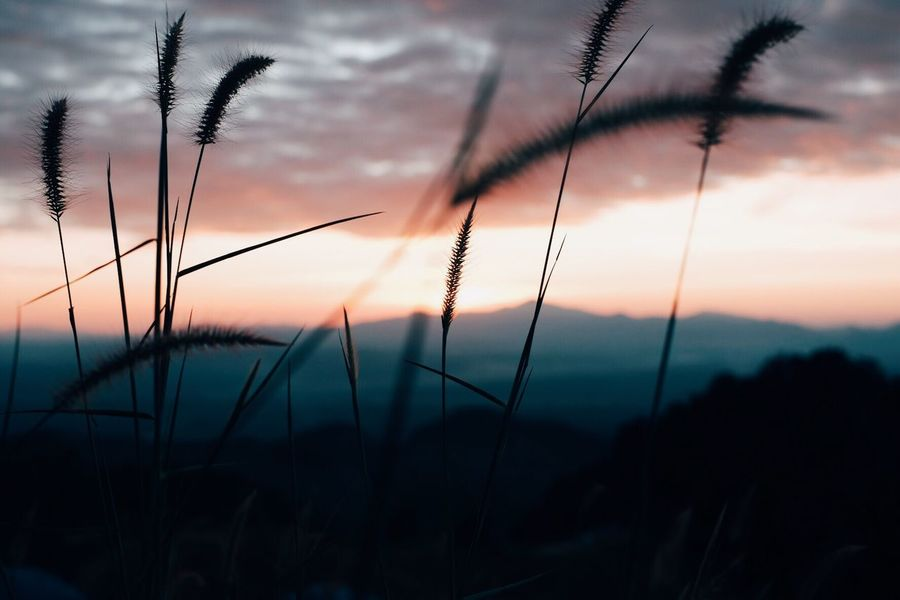 Sunset Sky Plant Beauty In Nature Tranquility Cloud - Sky Growth Silhouette Nature Tranquil Scene Scenics - Nature Focus On Foreground No People Field Land Close-up Outdoors Non-urban Scene Grass Dusk