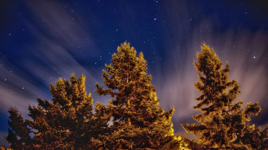 Pine trees against sky at night
