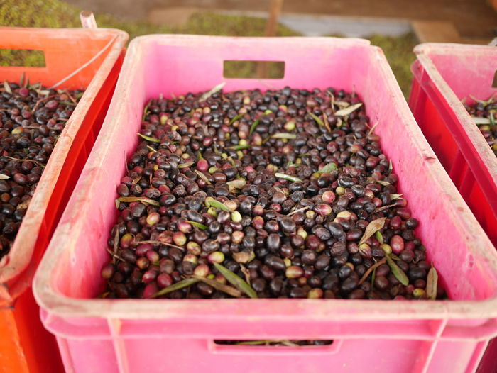 High angle view of olives in crates
