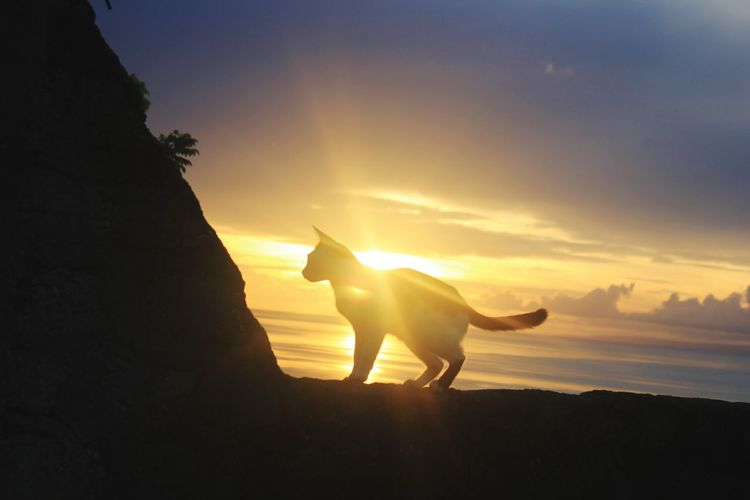 cat and sunrise