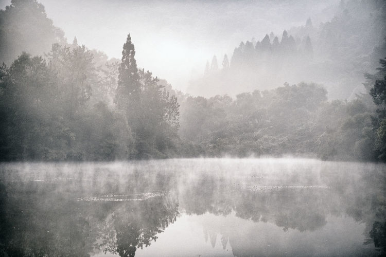 Beauty In Nature Day Fog Forest Hazy  Idyllic Korea Lake Landscape Mist Mountain Nature No People Outdoors Remote Scenics Sky Tranquil Scene Tranquility Travel Destinations Tree Water
