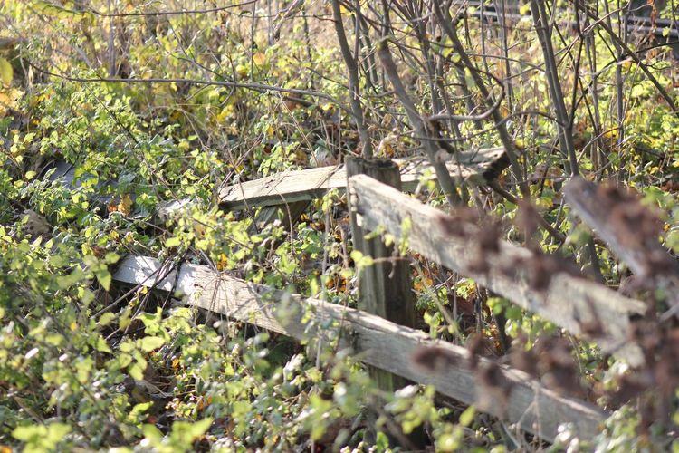 Old Fence Wooden Fence Beauty In Nature Broken Fence Fence Nature Nature Reclaims No People Outdoors Weathered Fence