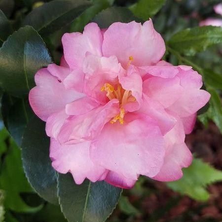 Pink Flower HTCOneM9 Htconelife Oneography 20 .7mp @htc @HTCUSA @HTC_UK @HTCelevate @HTCMEA @HTC_IN @HTCIreland @HTCCanada @HTCMalaysia @htcsouthasia @htcfrance TeamHTC IBleedGreen