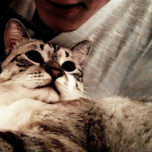 Cat Catboy Lovecat  Blackeyes eyes good boanoite flw