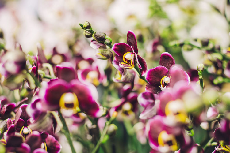Orchid family