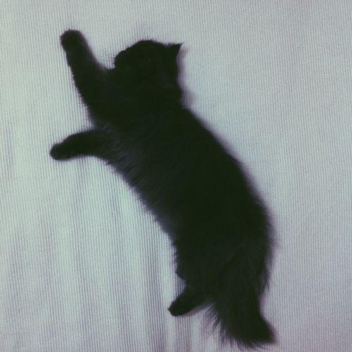 Cat Cats Catoftheday Cat♡ Cat Lovers My Cat