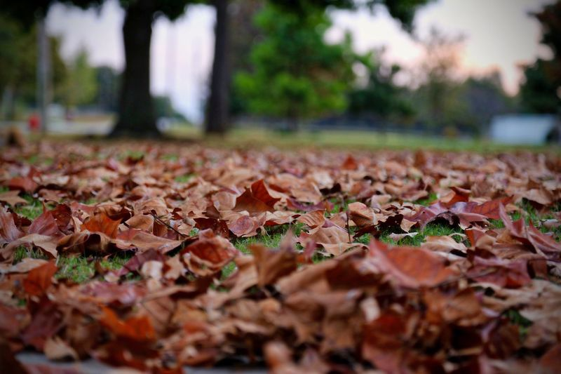 Fall Leaves Autumn Leaf Change Leaves Nature Fallen Outdoors Beauty In Nature First Eyeem Photo