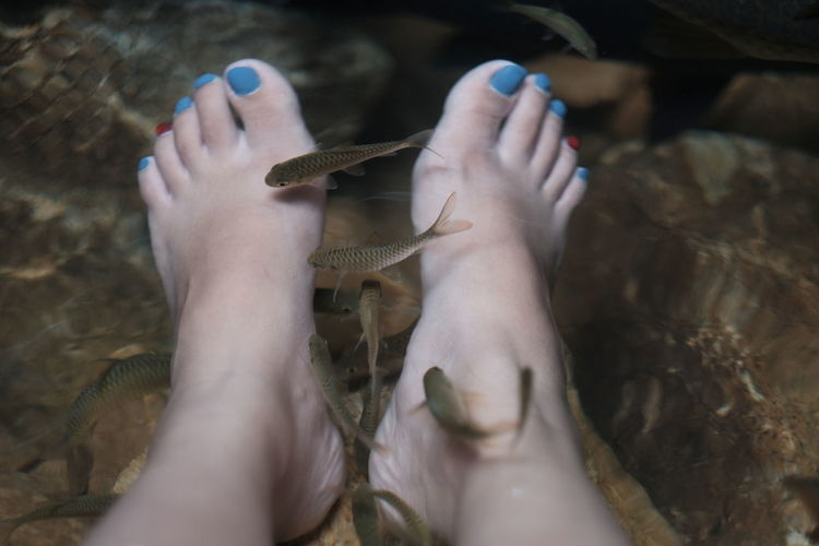 Low section of woman receiving fish pedicure