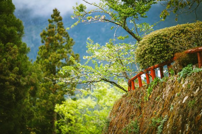 Taiwan Tree Growth No People Outdoors Low Angle View Hanging Nature Day Sky Architecture Close-up Ali Mountain