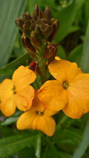 Yellow rainy