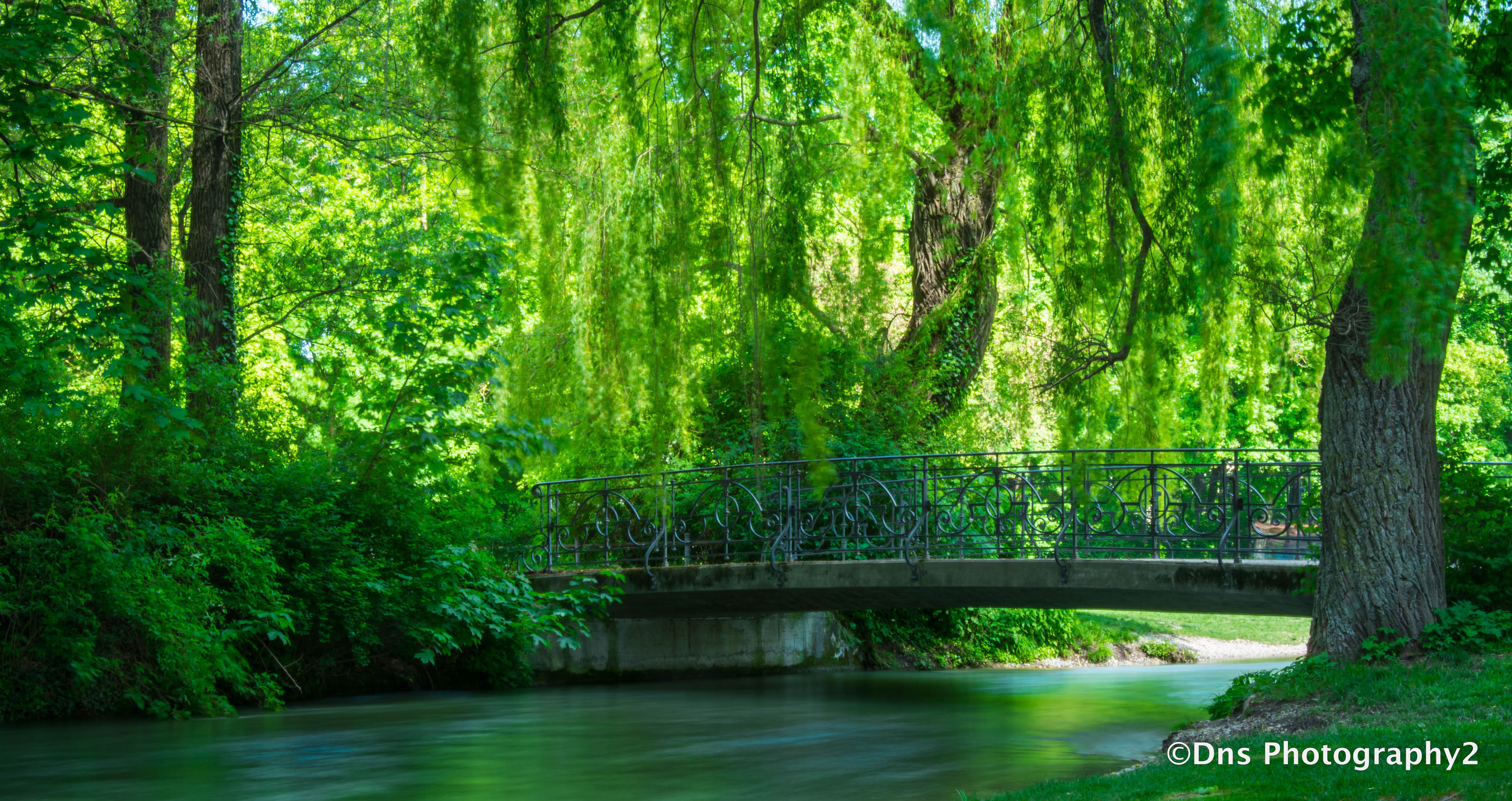tree, water, tranquility, green color, growth, tranquil scene, beauty in nature, nature, forest, scenics, river, lush foliage, waterfront, branch, idyllic, bridge - man made structure, lake, green, day, connection