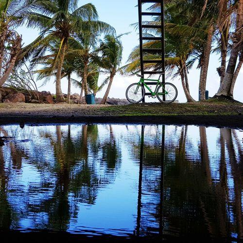 Tree Water Reflection Lake Palm Tree Sky
