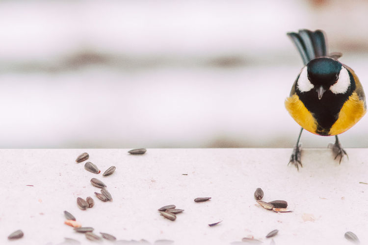 Close-up of bird perching on a table