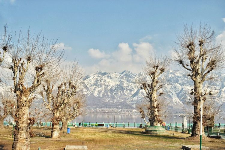 Bare trees on snowcapped mountains against sky