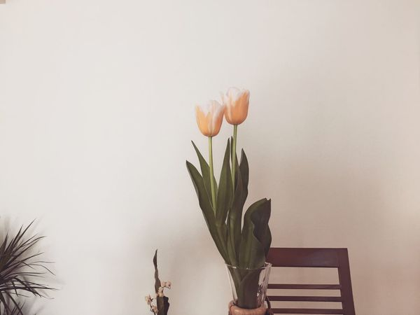 Flower Beauty In Nature Tulip Nature Growth Vase Plant No People Freshness Flower Head Blooming Fragility Day
