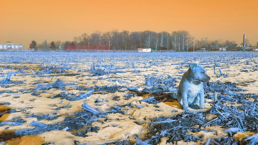 Adapted To The City Uniqueness EyeEmNewHere First Eyeem Photo Dog Animal Photography Urban Survivalist Amstaff Poland Nature Rambo